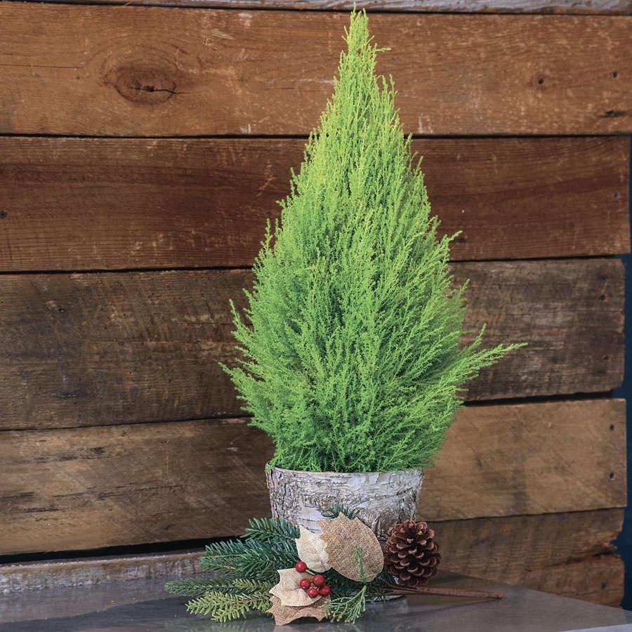 10 easy pieces tabletop christmas trees the organized home - Live Mini Christmas Tree